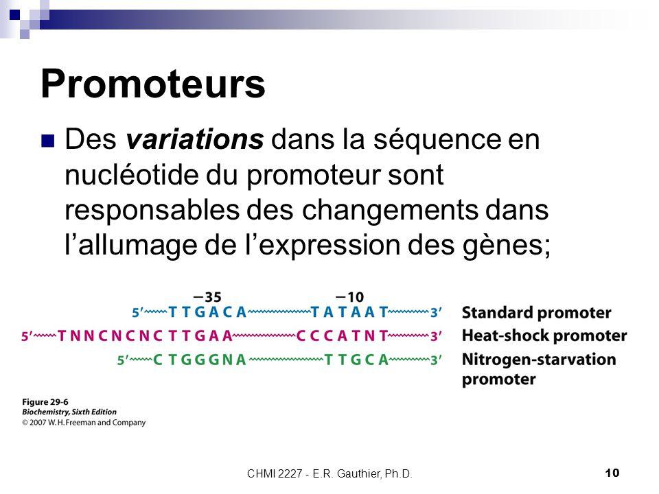 Promoteurs Des variations dans la séquence en nucléotide du promoteur sont responsables des changements dans l'allumage de l'expression des gènes;
