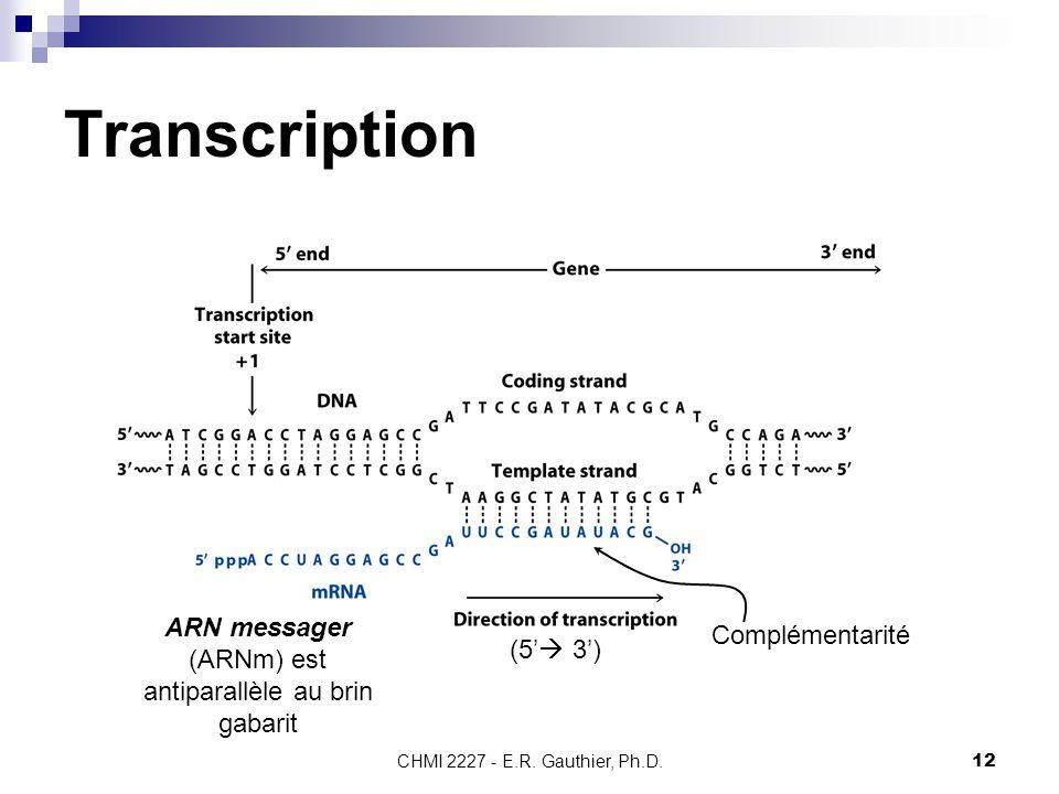 ARN messager (ARNm) est antiparallèle au brin gabarit