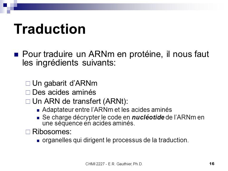 Traduction Pour traduire un ARNm en protéine, il nous faut les ingrédients suivants: Un gabarit d'ARNm.