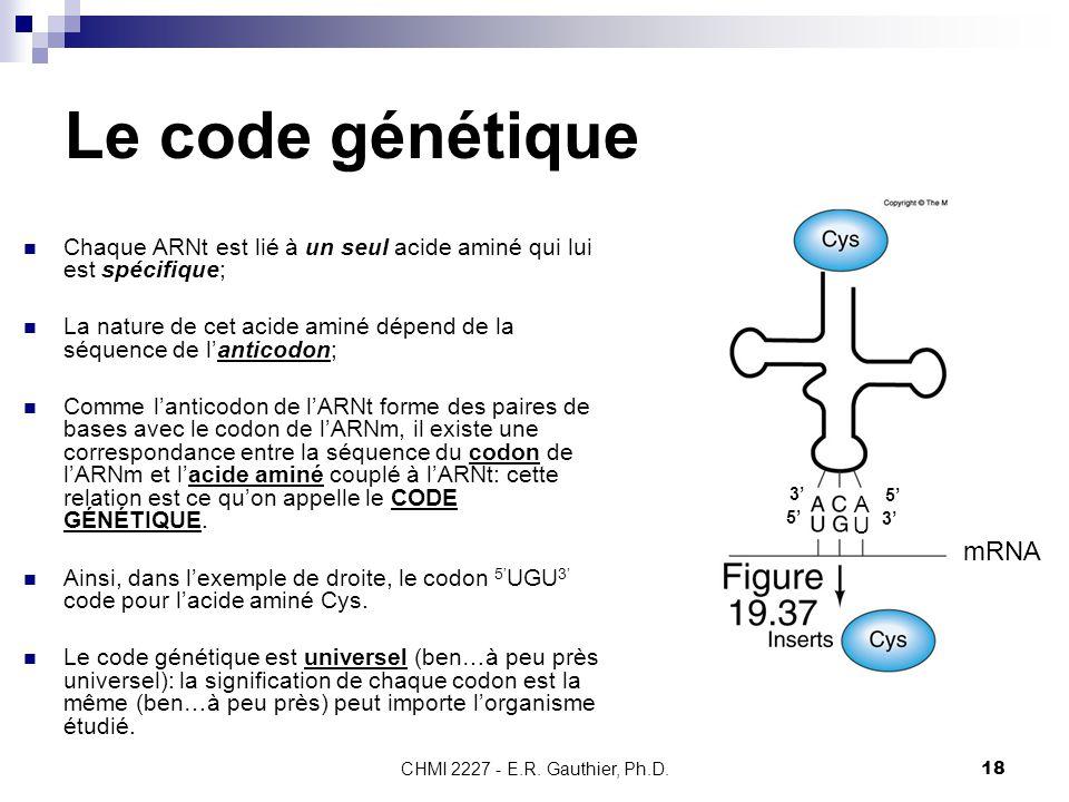 Le code génétique 5' 3' A. U. mRNA. Chaque ARNt est lié à un seul acide aminé qui lui est spécifique;