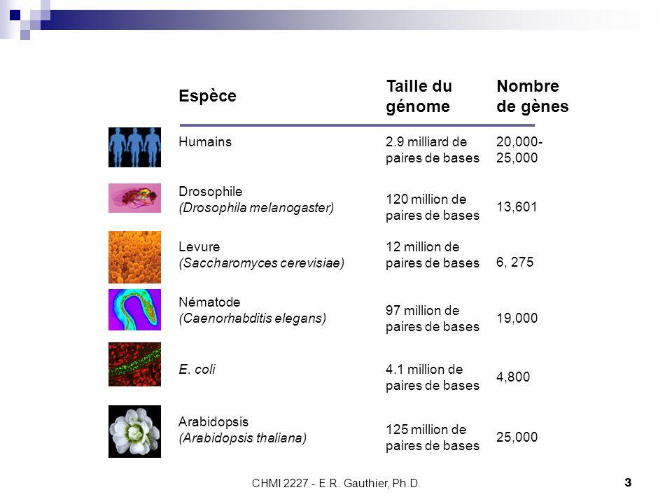 Espèce Taille du génome Nombre de gènes Humains
