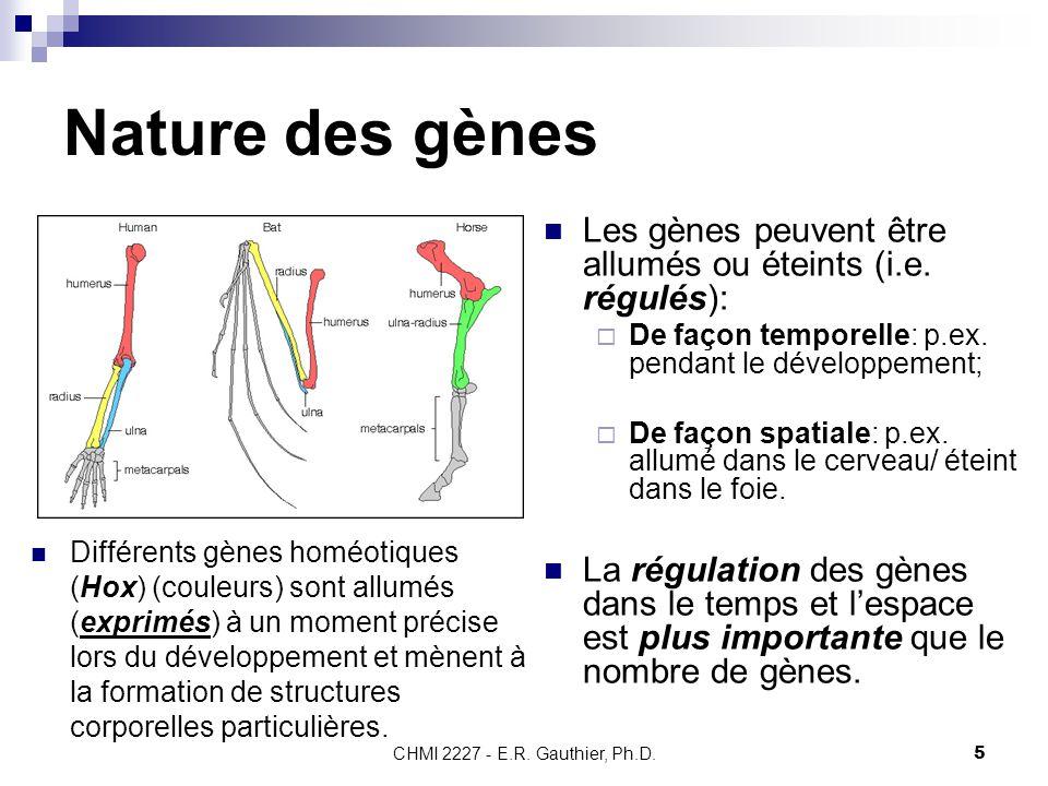 Nature des gènes Les gènes peuvent être allumés ou éteints (i.e. régulés): De façon temporelle: p.ex. pendant le développement;
