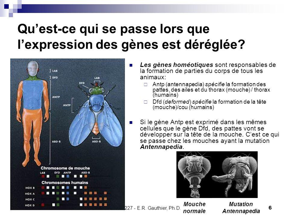 Qu'est-ce qui se passe lors que l'expression des gènes est déréglée