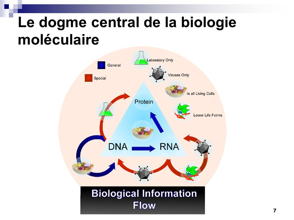 Le dogme central de la biologie moléculaire