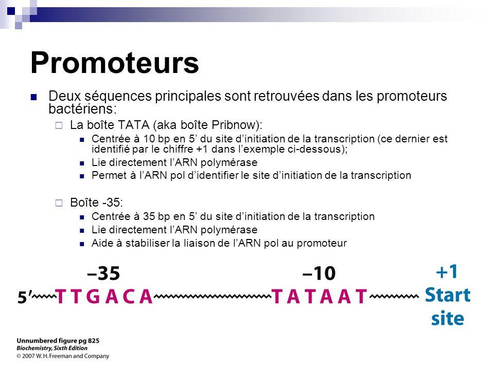 Promoteurs Deux séquences principales sont retrouvées dans les promoteurs bactériens: La boîte TATA (aka boîte Pribnow):