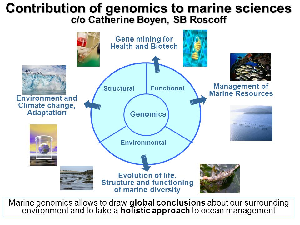 Contribution of genomics to marine sciences