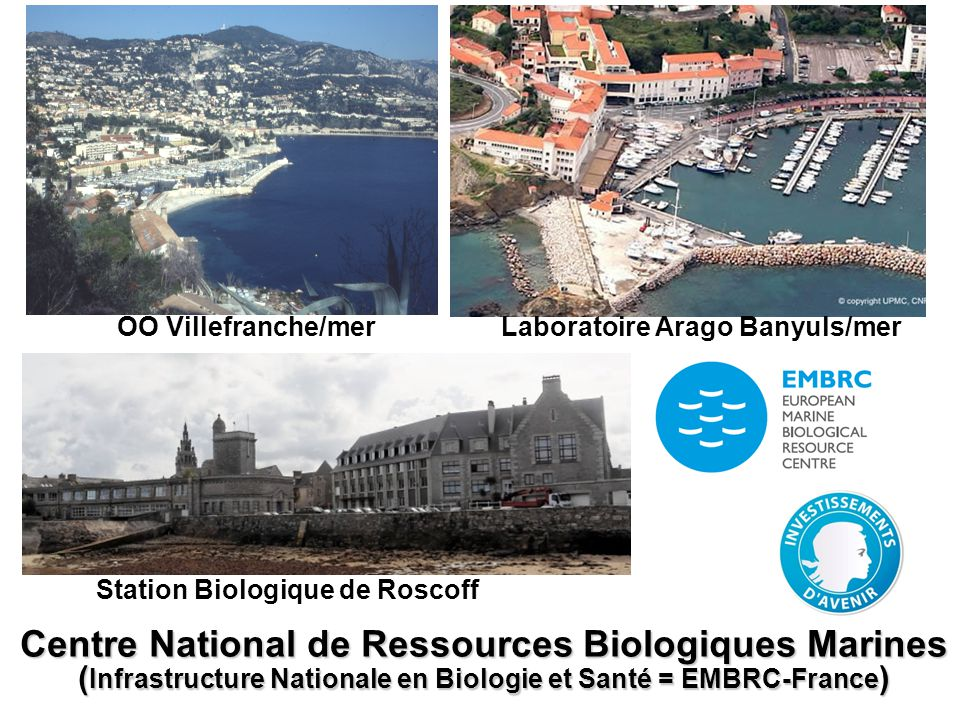 OO Villefranche/mer Laboratoire Arago Banyuls/mer