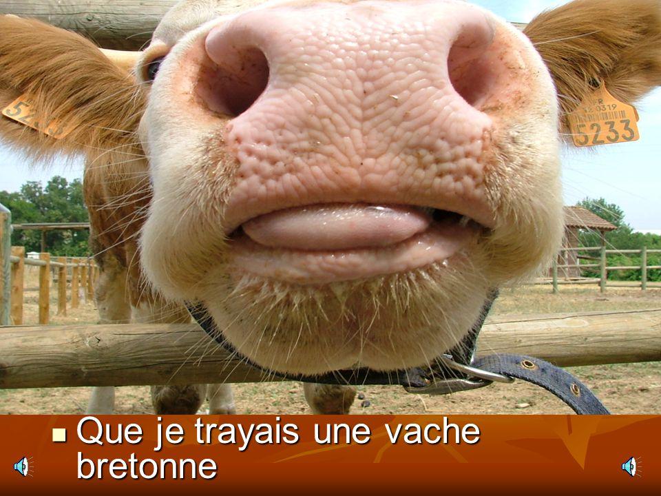 Que je trayais une vache bretonne