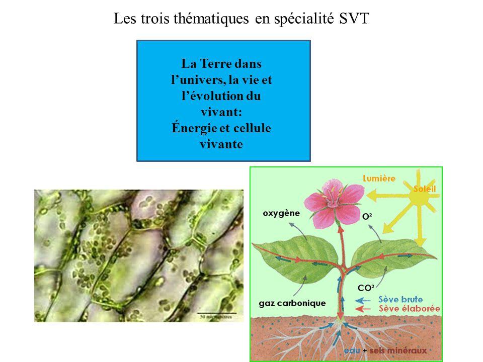 Les trois thématiques en spécialité SVT