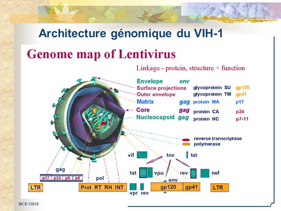 Architecture génomique du VIH-1
