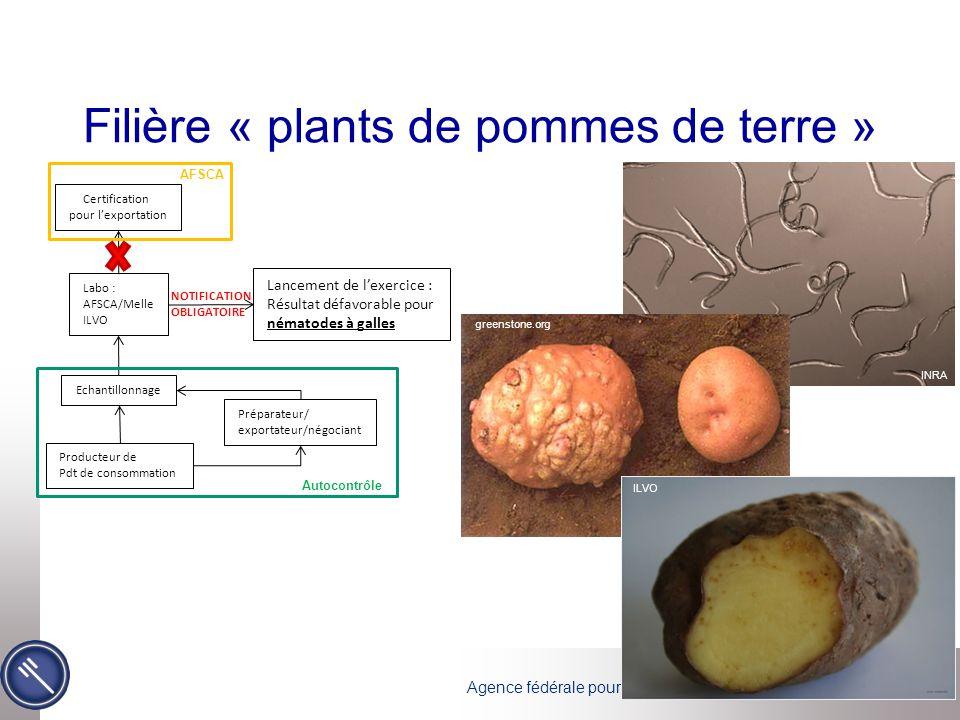 Filière « plants de pommes de terre »