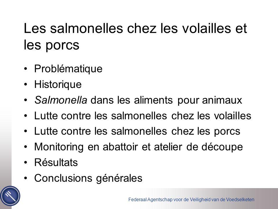 Les salmonelles chez les volailles et les porcs