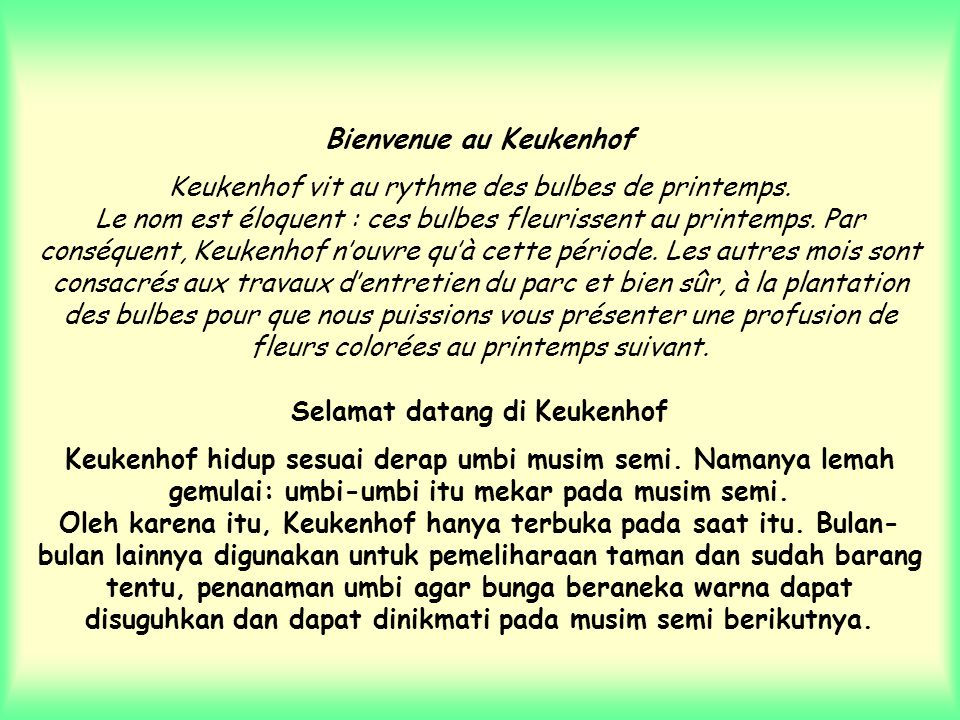 Bienvenue au Keukenhof Keukenhof vit au rythme des bulbes de printemps