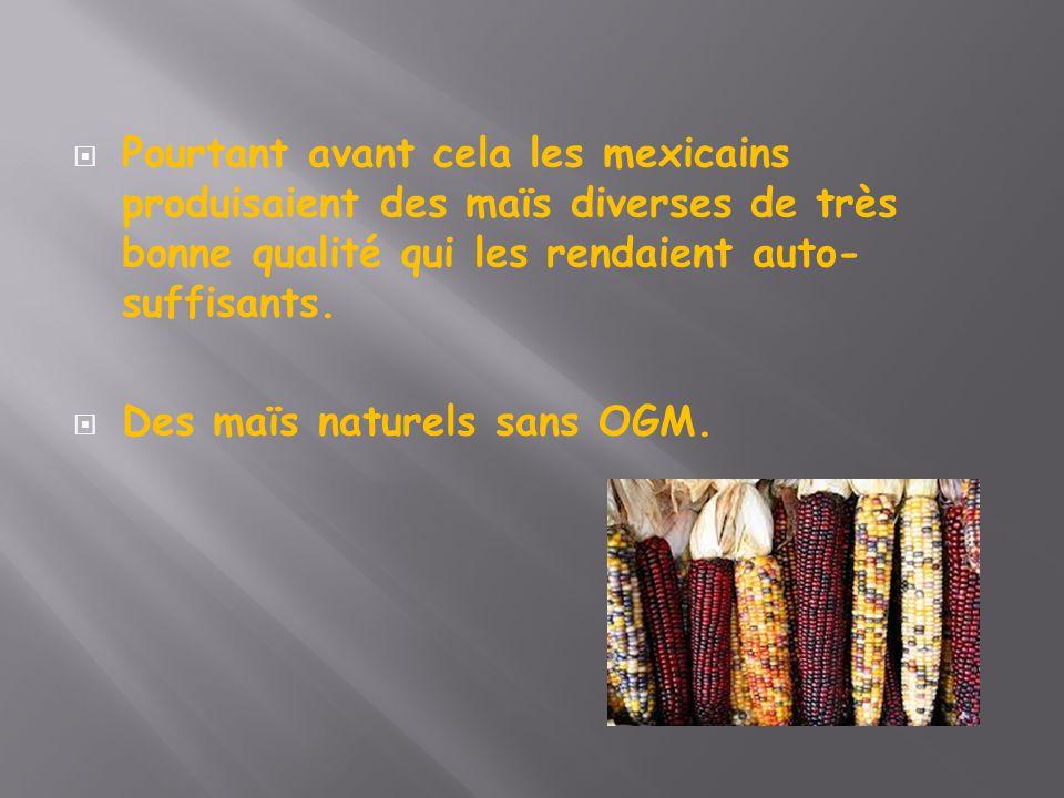 Pourtant avant cela les mexicains produisaient des maïs diverses de très bonne qualité qui les rendaient auto-suffisants.
