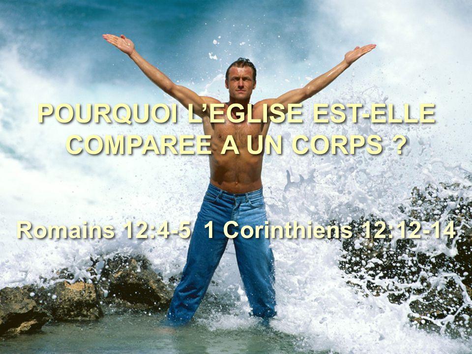 POURQUOI L'EGLISE EST-ELLE COMPAREE A UN CORPS