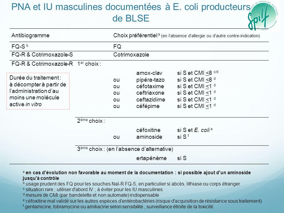 PNA et IU masculines documentées à E. coli producteurs de BLSE