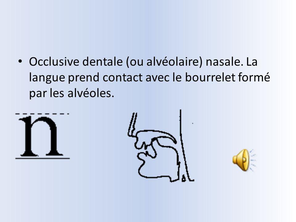 Occlusive dentale (ou alvéolaire) nasale