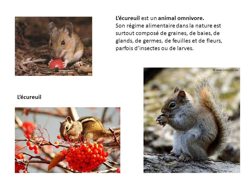 L'écureuil est un animal omnivore.