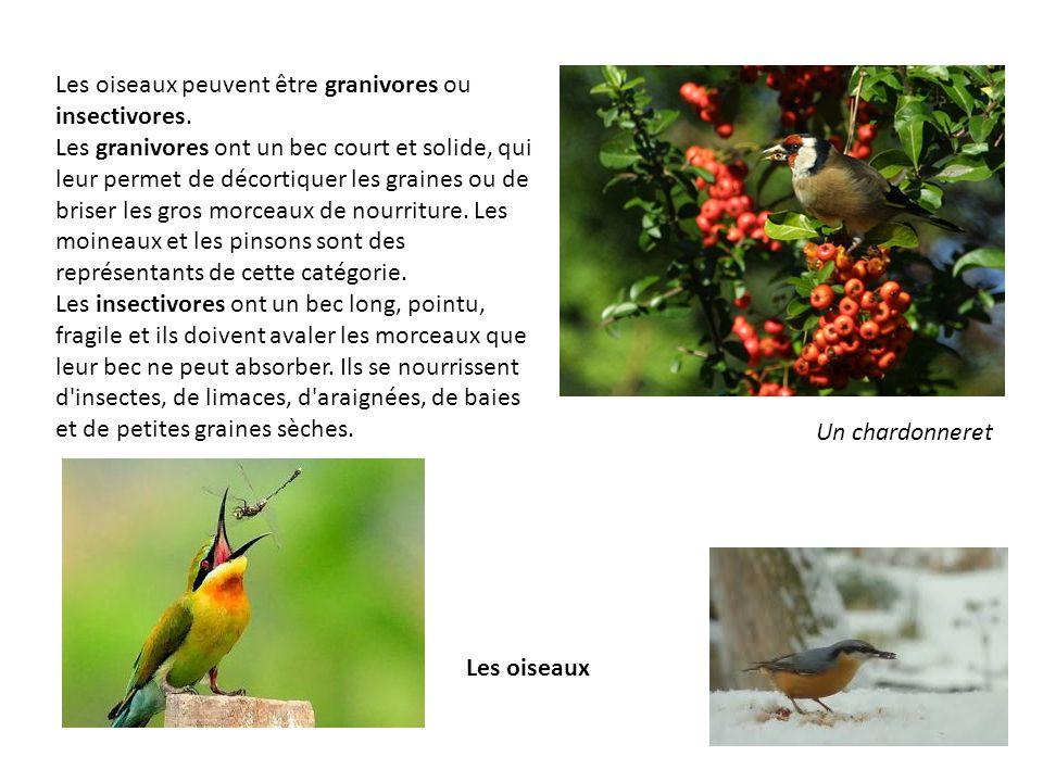 Les oiseaux peuvent être granivores ou insectivores.