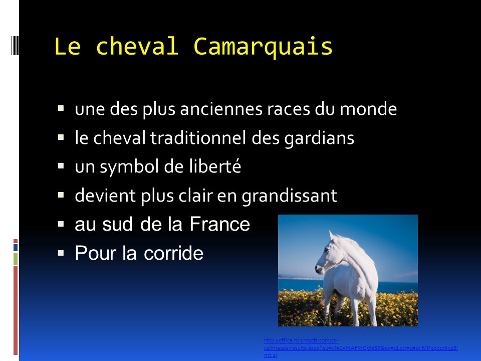 Le cheval Camarquais une des plus anciennes races du monde