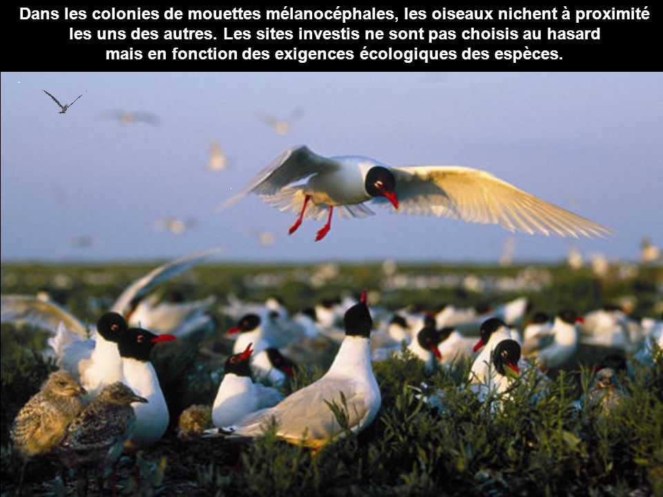 mais en fonction des exigences écologiques des espèces.