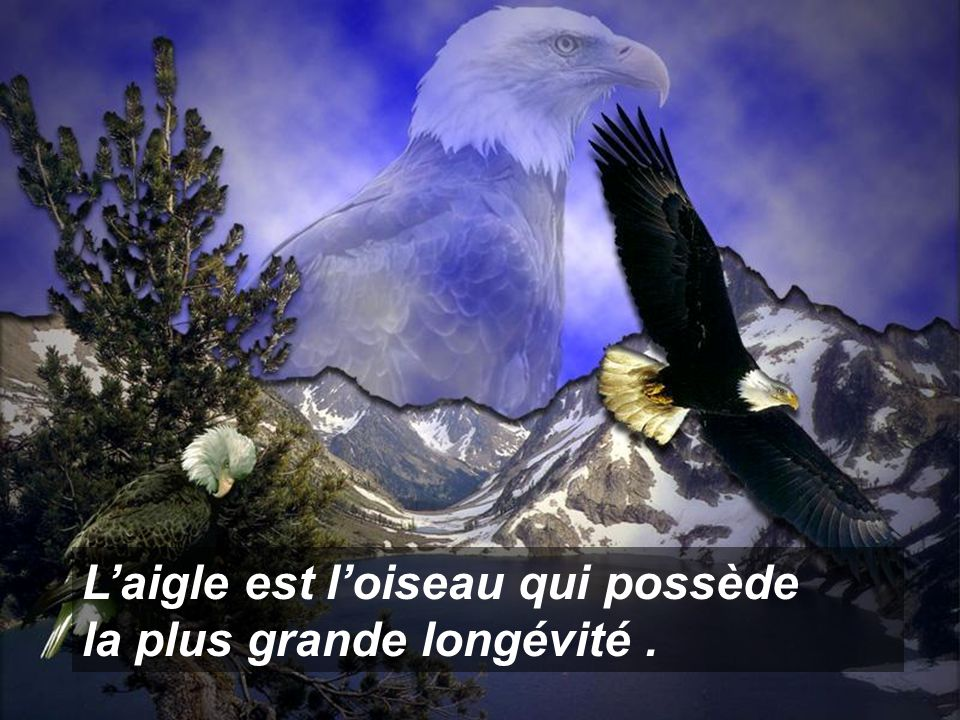 L'aigle est l'oiseau qui possède