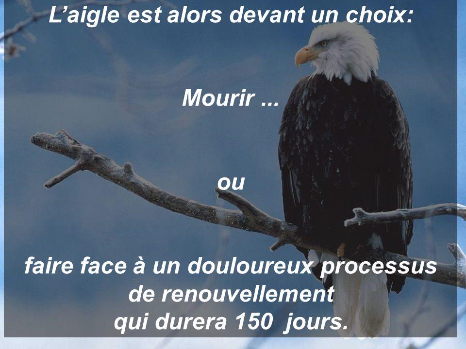 L'aigle est alors devant un choix: