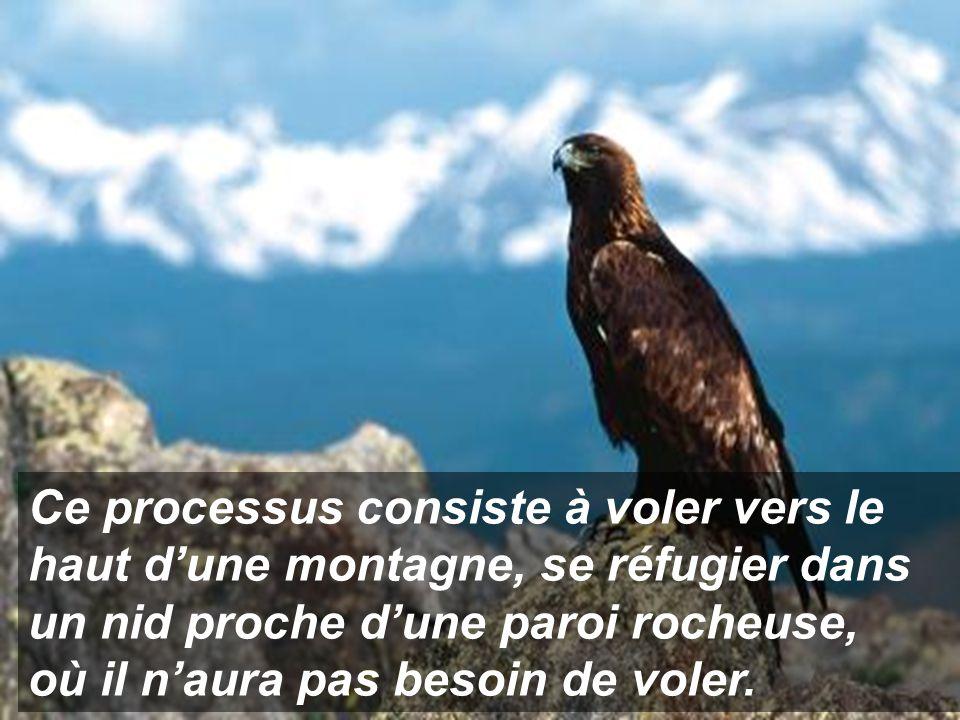 Ce processus consiste à voler vers le haut d'une montagne, se réfugier dans un nid proche d'une paroi rocheuse,