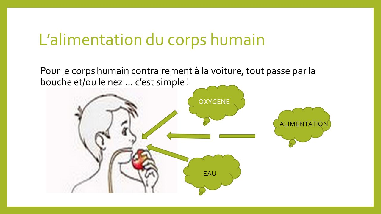 L'alimentation du corps humain
