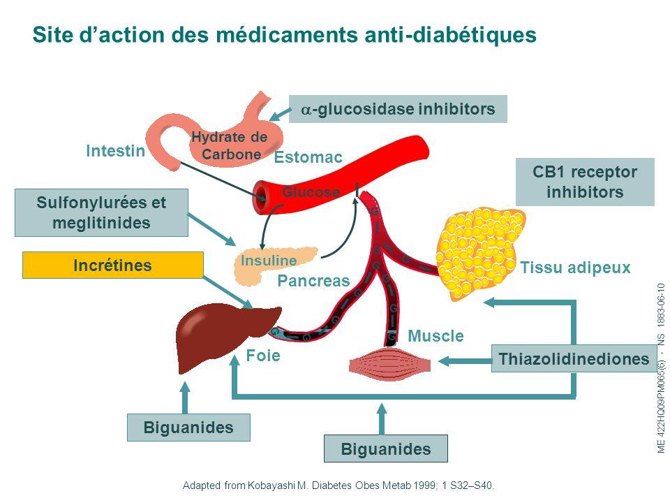 Site d'action des médicaments anti-diabétiques