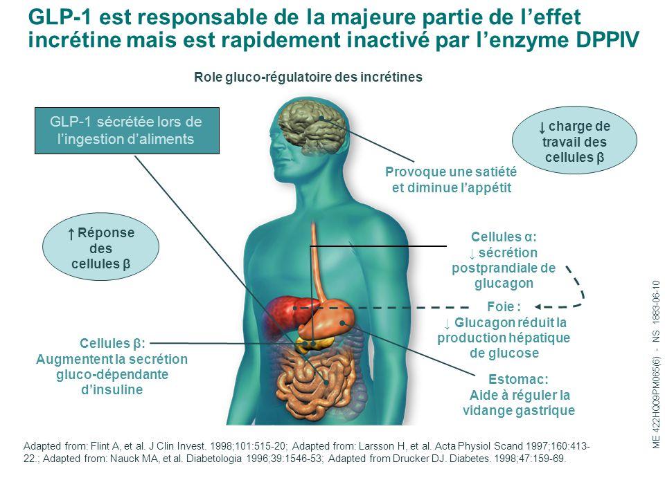 GLP-1 est responsable de la majeure partie de l'effet incrétine mais est rapidement inactivé par l'enzyme DPPIV
