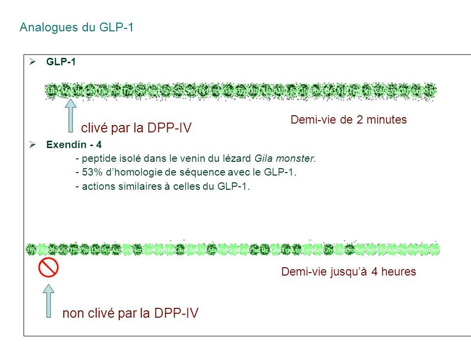 clivé par la DPP-IV non clivé par la DPP-IV Analogues du GLP-1