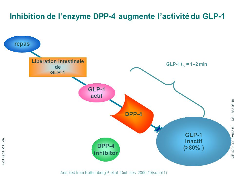 Inhibition de l'enzyme DPP-4 augmente l'activité du GLP-1