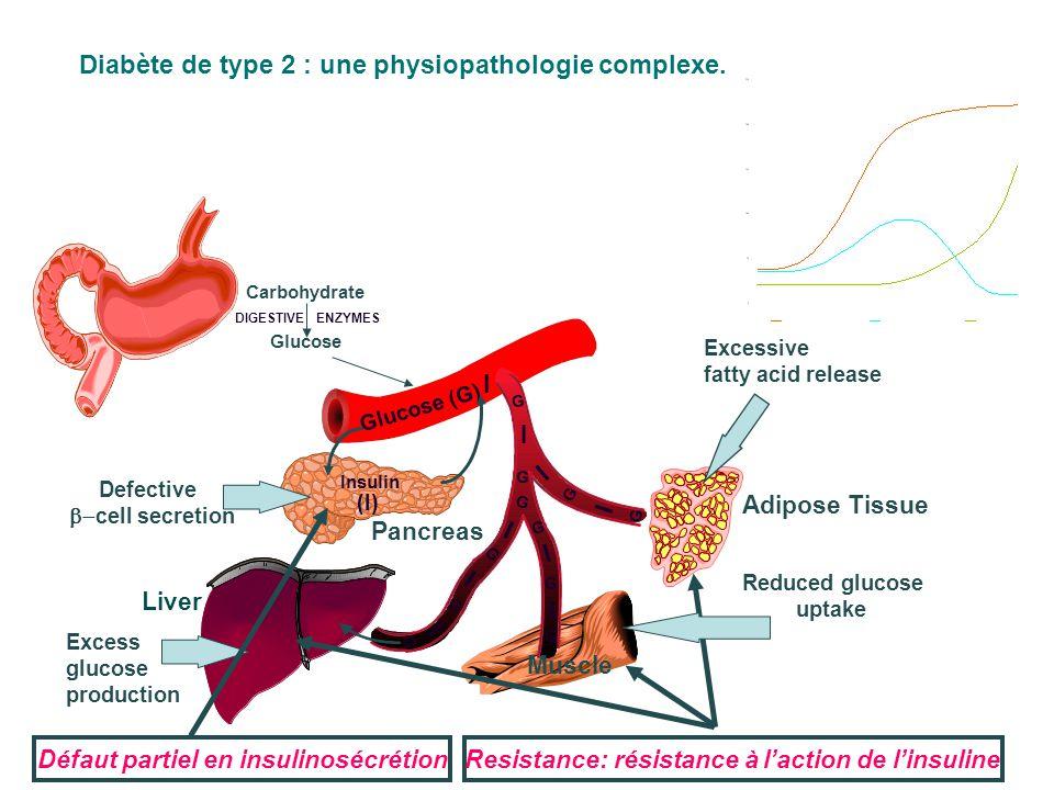Diabète de type 2 : une physiopathologie complexe.