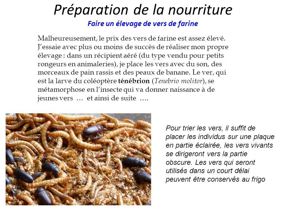 Préparation de la nourriture Faire un élevage de vers de farine