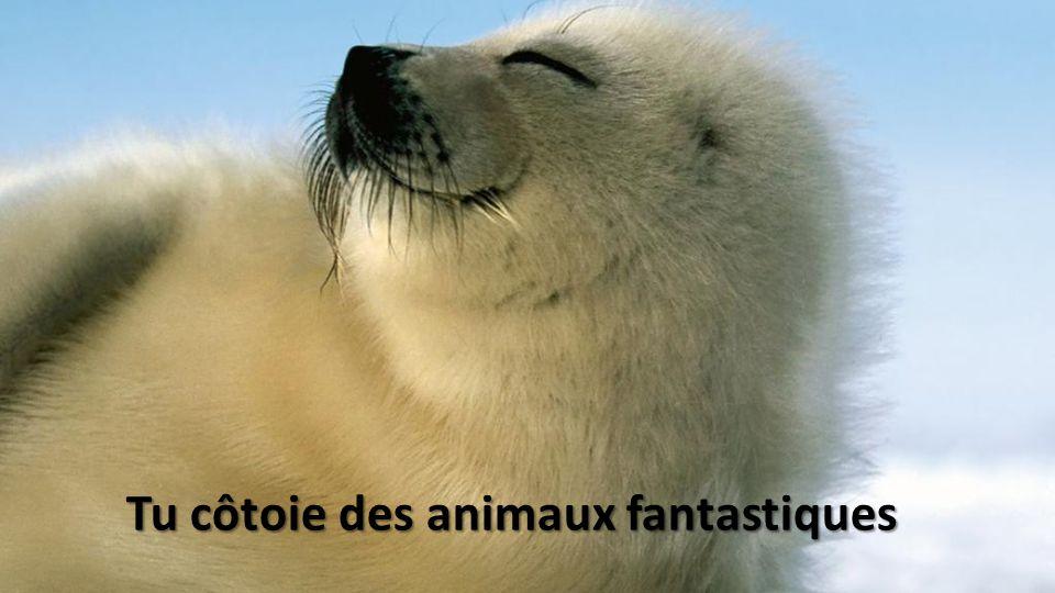 Tu côtoie des animaux fantastiques