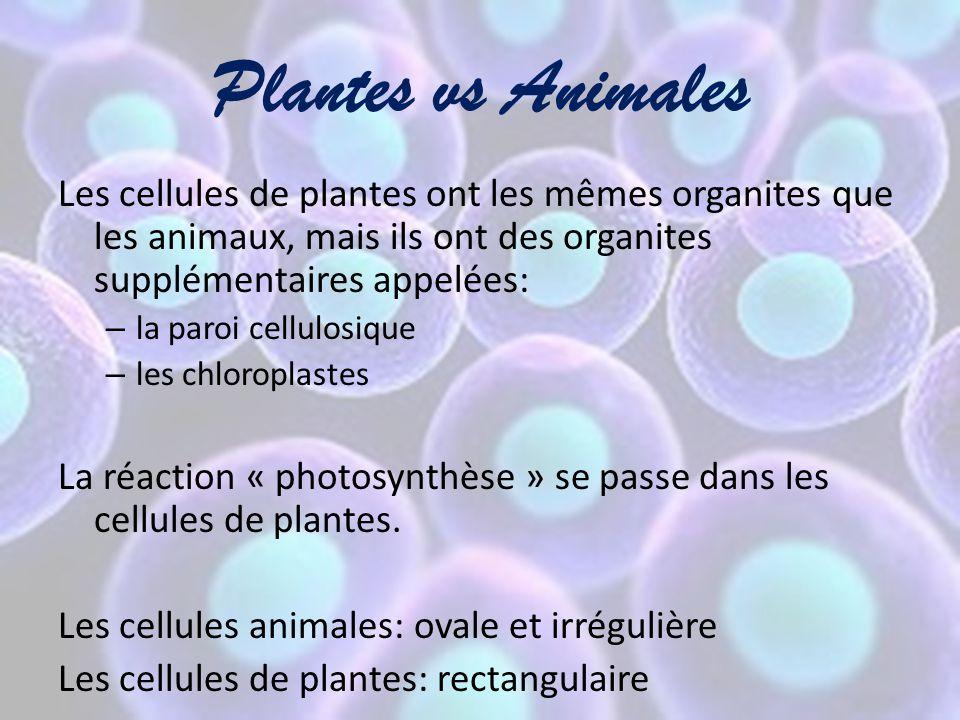Plantes vs Animales Les cellules de plantes ont les mêmes organites que les animaux, mais ils ont des organites supplémentaires appelées: