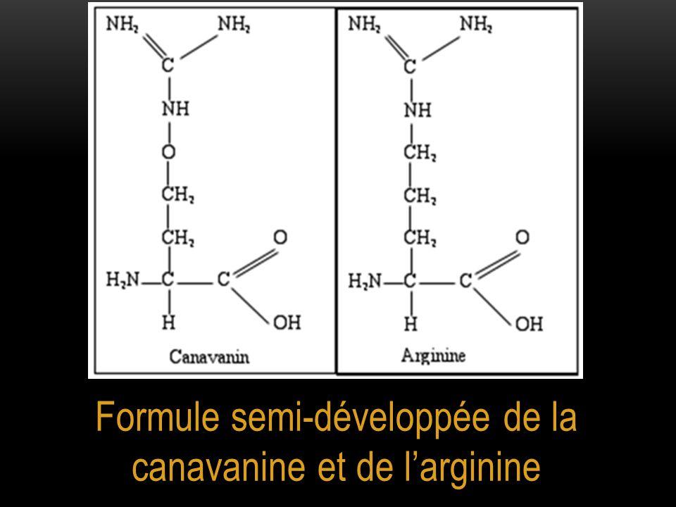 Formule semi-développée de la canavanine et de l'arginine