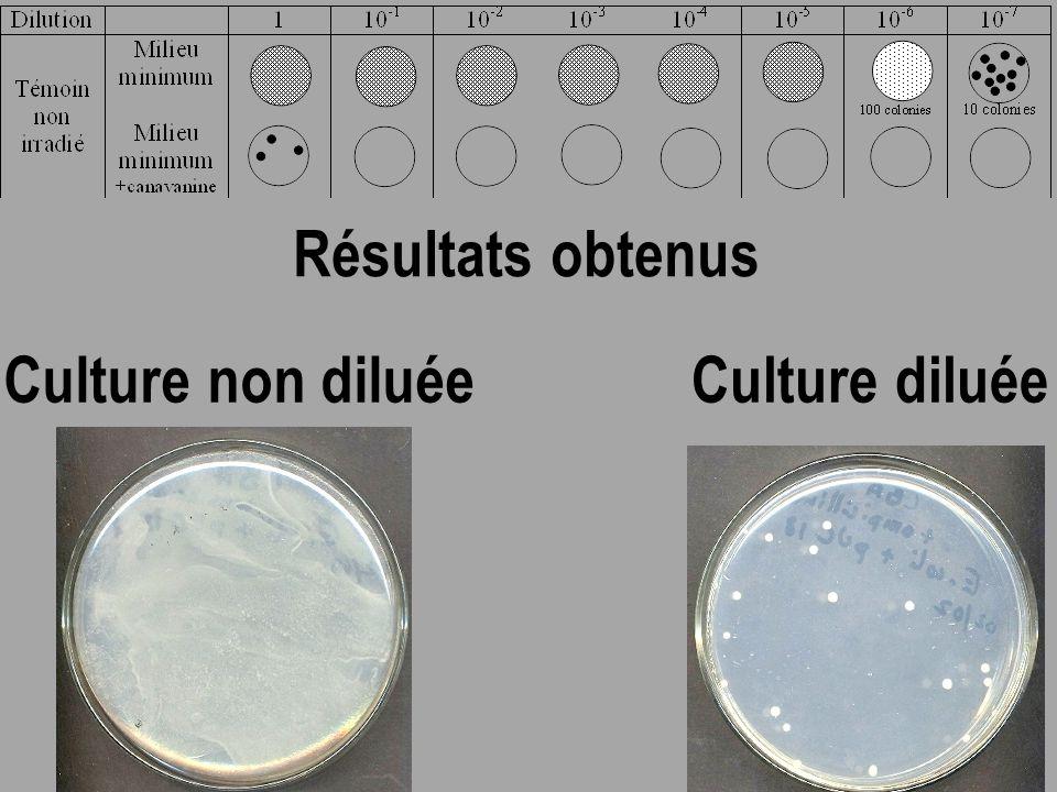 Résultats obtenus Culture non diluée Culture diluée