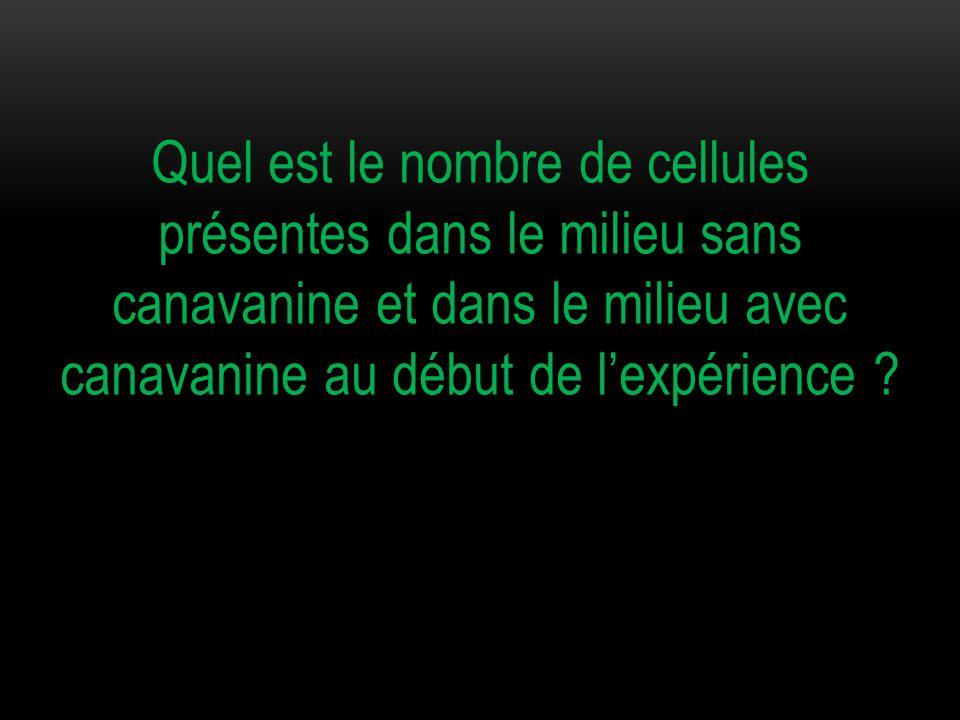 Quel est le nombre de cellules présentes dans le milieu sans canavanine et dans le milieu avec canavanine au début de l'expérience