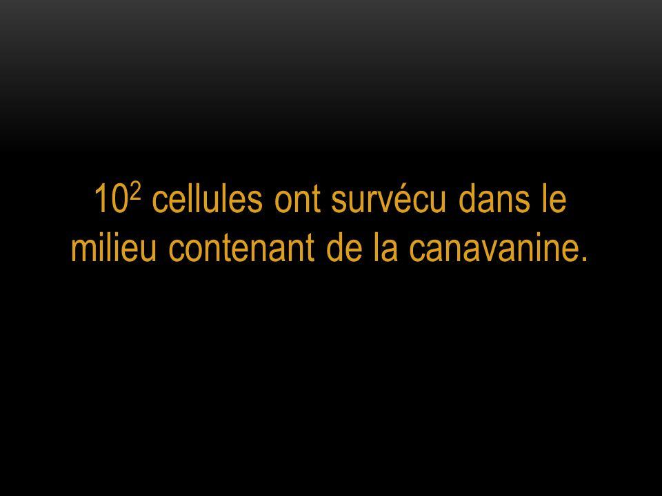 102 cellules ont survécu dans le milieu contenant de la canavanine.
