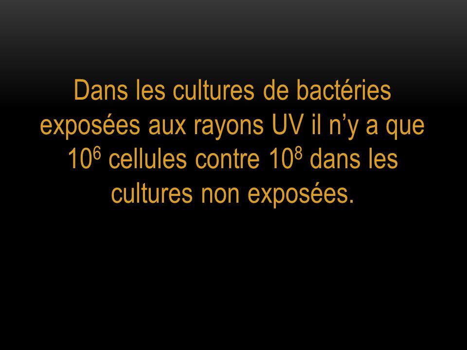 Dans les cultures de bactéries exposées aux rayons UV il n'y a que 106 cellules contre 108 dans les cultures non exposées.