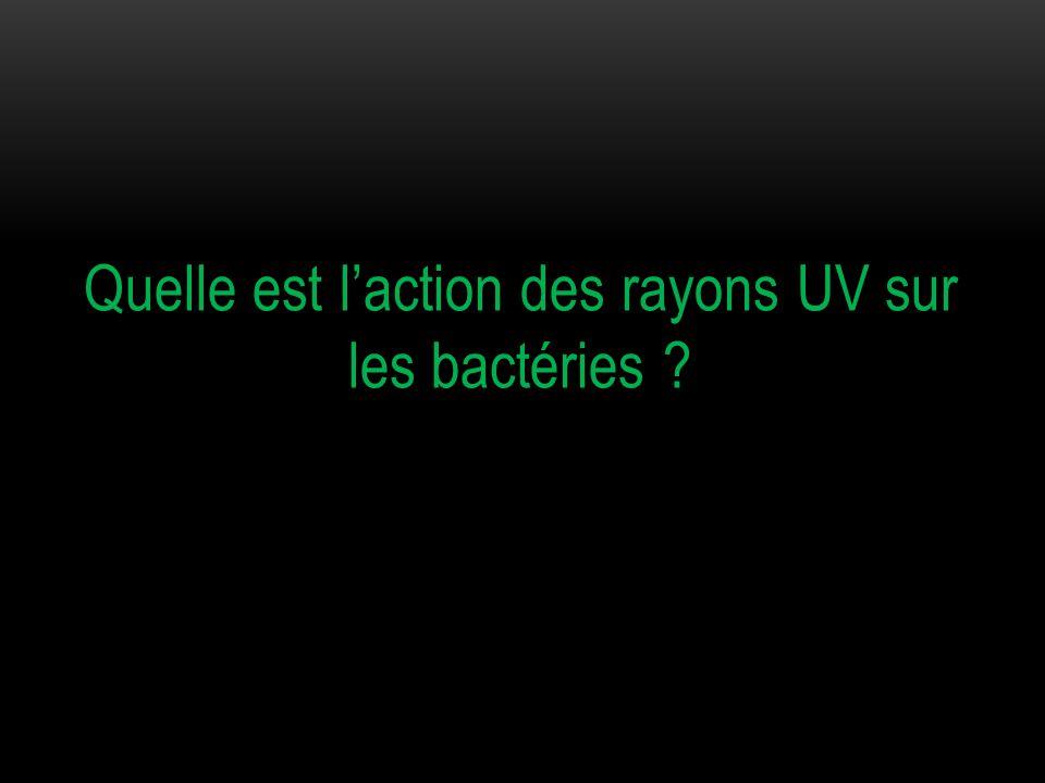 Quelle est l'action des rayons UV sur les bactéries