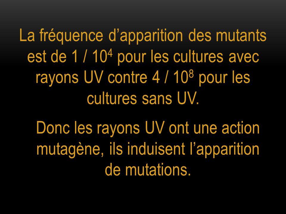 La fréquence d'apparition des mutants est de 1 / 104 pour les cultures avec rayons UV contre 4 / 108 pour les cultures sans UV.
