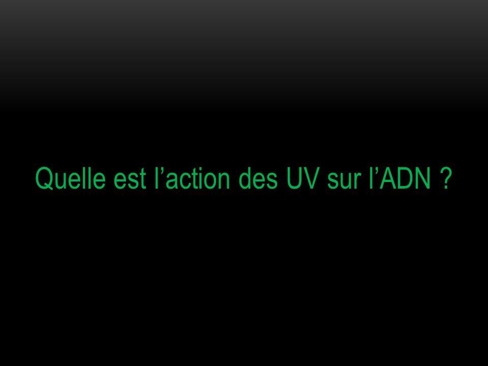 Quelle est l'action des UV sur l'ADN