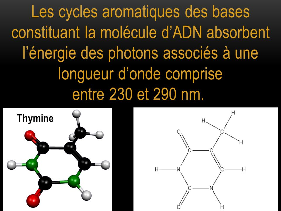 Les cycles aromatiques des bases constituant la molécule d'ADN absorbent l'énergie des photons associés à une longueur d'onde comprise