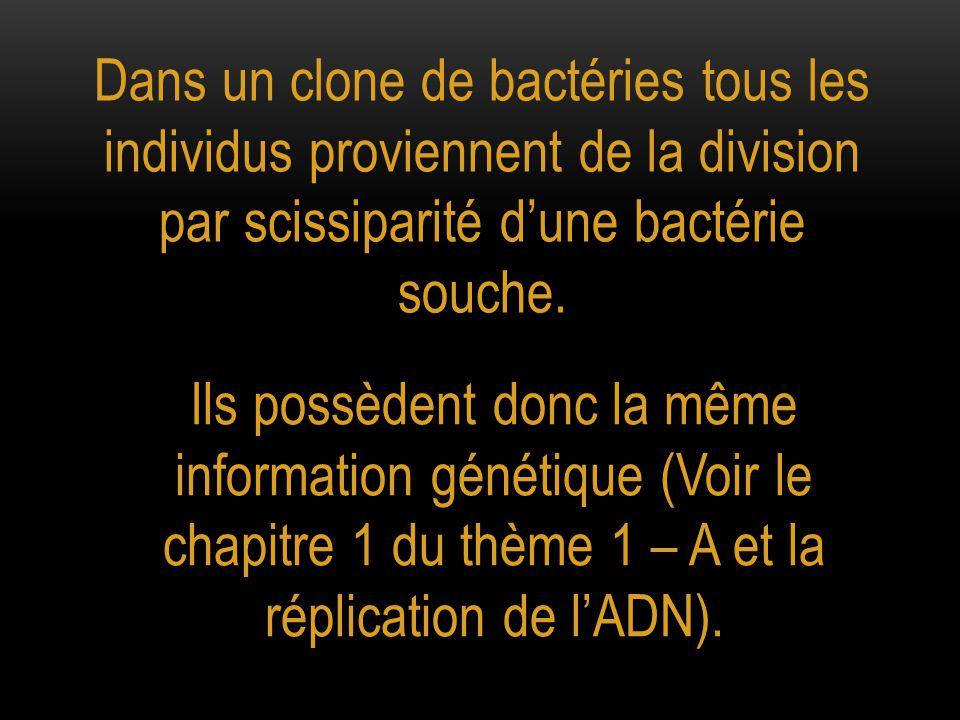 Dans un clone de bactéries tous les individus proviennent de la division par scissiparité d'une bactérie souche.