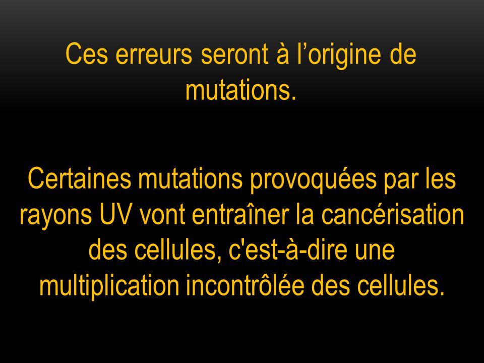 Ces erreurs seront à l'origine de mutations.