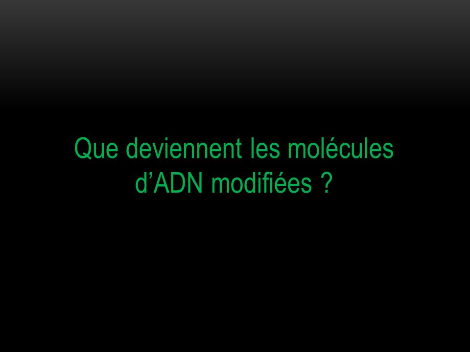 Que deviennent les molécules d'ADN modifiées