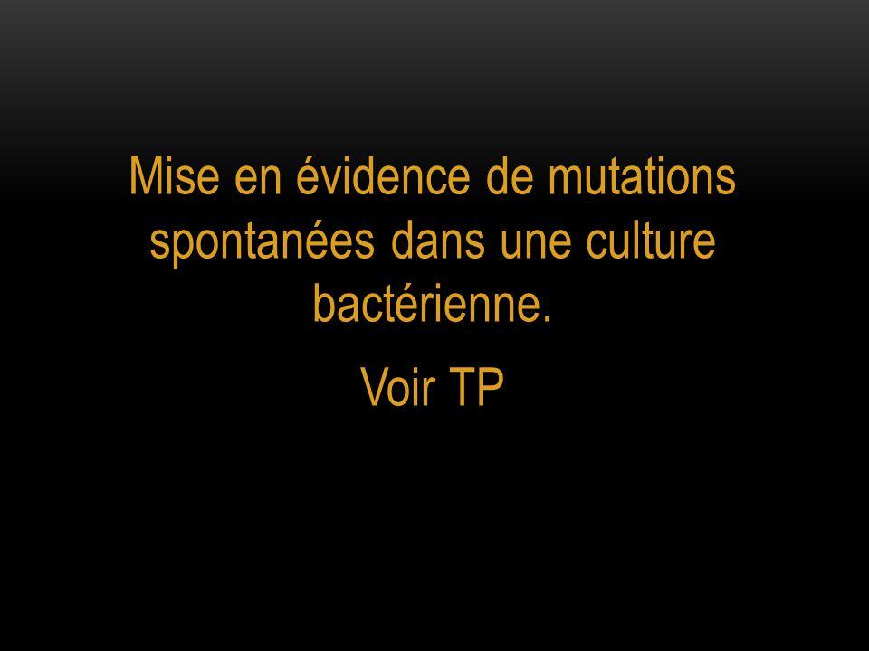Mise en évidence de mutations spontanées dans une culture bactérienne.